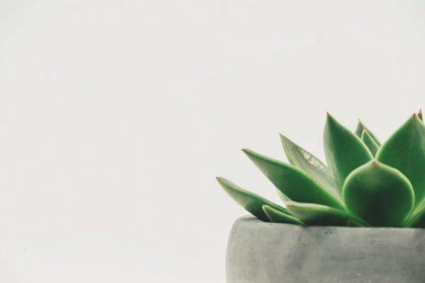 Növények a tanteremben- melyiket válasszuk?