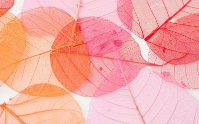 Látványos őszi projekt levelekből